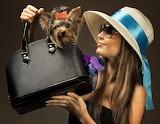 A Yorkie in my Handbag