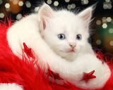 Fluffy Christmas