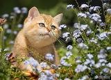 Cat-flowers-1151_large