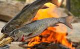 Pico Campfire Trout