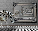 Zebra Photomontage
