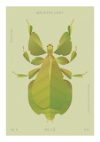 "Insects tumblr lustik ""Walking Leaf"" """"Hoàng Hoàng""."