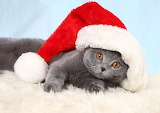 Christmas Cats Kittens Winter hat Funny Lying down 576640 1280x9