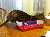 Box lover