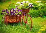 ☺♥ Pretty garden...