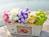 Your happy basket