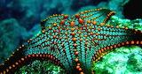 Stunning starfish