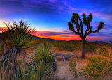 Sunset in Yucca Valley