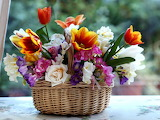 Tulips roses freesia color composition combination basket