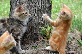 Cats-204184 960 720