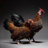 We-Photographed-Hundreds-of-The-Most-Beautiful-Chicken-Couples-A