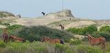 Dispersed-horses (1)