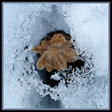 winter remains of a flower