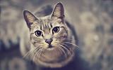 Cute-cat-close-up-look