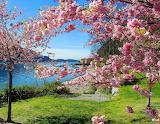 Spring on the lake