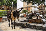 donkey, water wheel in Spain