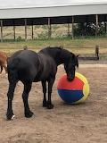 Tili with the ball