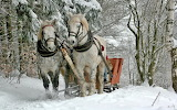 Sleigh Ride in the Woods