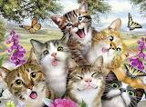 Friendly felines