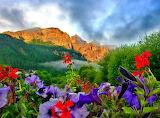 ^ Mountain Flowers