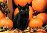 #Halloween Kitty Among the Pumpkins