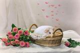 Heart, roses, Guinea pig, basket, animal, flowers
