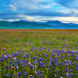 ~Field of Flowers~