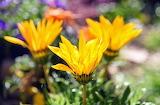 Flores 810