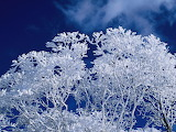 Winter Branches, Blue Sky