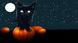1halloween black cat