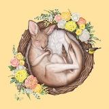 Baby Kangaroo by Elise Martinson