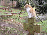 Graveyard cat