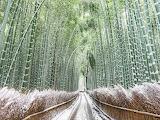 Photo Takahiro Bessho Snow frost powdered bamboo grove Japan
