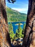 Tahoe between the trees