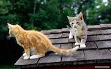 Cat-animals