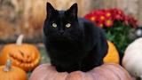 1halloween-cat-