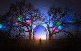 Fantasy tree lights gate