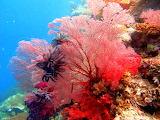 Coral Garden ~ Palau