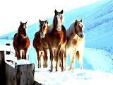 Four Beautiful Horses in the Cold Umatilla Oregon USA