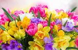 Daffodils, tulips, freesias, bouquet