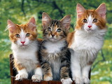 ☺♥ Cute x 3...☺