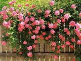 bloomin' beauties
