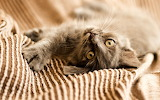 Cat-animals-cute-lying
