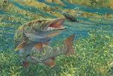 Fish-muskie
