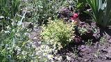 Садовый гномик