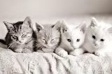 beautiful-black-cats-cute