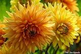 Kwiaty - foto - Ewa Gajewska