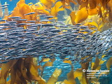 Animals Fish tumblr montereybayaquarium