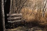 Bench-