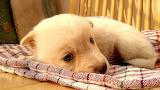 Adorable baby dog